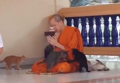 子猫のかわいさに抗わなくてはならないというタイの僧侶の修行