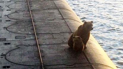 熊の親子 射殺される