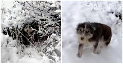 小犬を救うため人間に助けを求めた母犬の物語