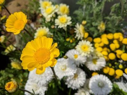 椅子に座って目線が下がると、小さなお花の美しさにハッとさせられる