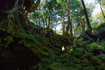 樹海で森林浴 「樹海リトリート」