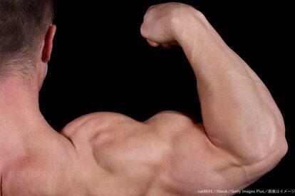 筋肉・二の腕