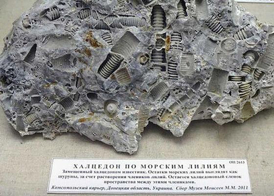 マジかよ】超古代文明か?3億年前の「ボルト」が発見される ...