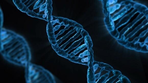 遺伝子 なぜ 交配 近親 疾患