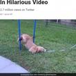 運動が苦手でやる気がない犬、障害物コースに挑戦する姿に大爆笑(米)<動画あり>(1コメント)