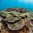 北海道×沖縄 小学生20名がサンゴの海を調査!流氷がやってくるオホーツク海とエメラルドグリーンのサンゴの海。北海道と沖縄の海の特徴やつながりを学び、海の未来を考える「第2回 しまうみ探検隊」を開催!(New!!)